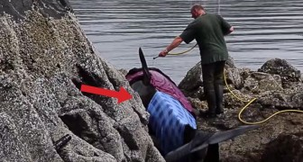 An Orca is trapped on the rocks, but these angels take care of her for 8 hours ... Wow!