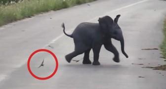 Veem um elefantinho agitado no meio da rua: o que está fazendo é muito engraçado