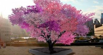 Deze boom is mooi, maar de vruchten van deze boom maken hem pas echt uniek!