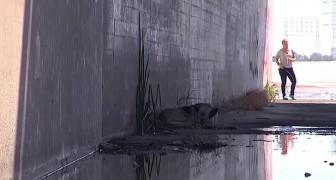 Ils descendent sur un canal et la trouvent toute seule, à dormir. Le sauvetage est émouvant