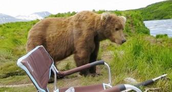Sie essen beim Camping, als jemand sie besucht....