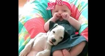Un an qu'ils grandissent ensemble : les images de cette petite fille avec le chien vont vous faire rêver