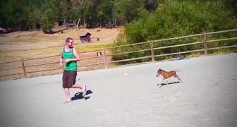 Este pony tiene 3 dias de vida: miren que cosa hace cuando su amigo comienza a correr...