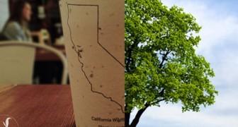 Bicchieri da caffè biodegradabili con semi incorporati: quando li getti via, diventano alberi