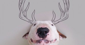 Un cane, un pennarello e un matrimonio finito: ecco come nasce un progetto artistico pazzesco