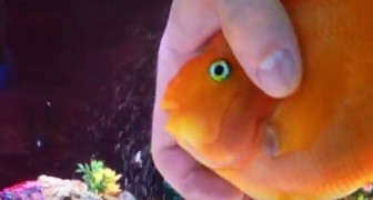 No pensaba que los peces tenian sentimientos...hasta que he visto las cosas que hace EL!
