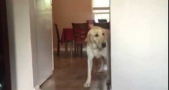 This dog is terrified by the carpet, but the way he overcomes his fear is exhilarating !