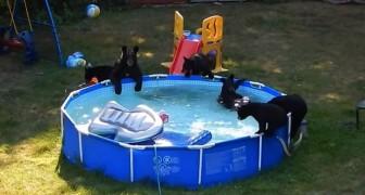 Sie schauen aus dem Fenster und können es nicht glauben. Das passiert in ihrem Pool!