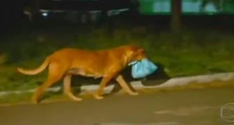 Ils suivent un chien dans une décharge : quand ils découvrent où ils vont, ils restent scotchés!