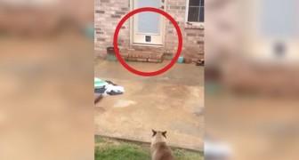 Un homme installe une chatière pour son chat mais... quelque chose ne se passe pas comme prévu!