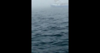 Hij is de oceaan aan het filmen, maar bij 0:08 beleeft hij een onvergetelijk moment!