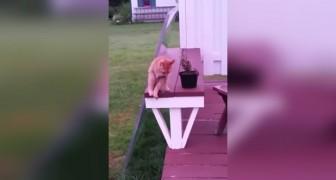 Inizia a filmare il suo gatto in giardino: quello che fa dopo 10 secondi è da non credere