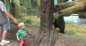 Un enfant et un bébé gorille s'observent : ce qu'ils font peu après n'a pas de prix!