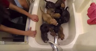 These 10 puppies have lost their mother: their story will move you !