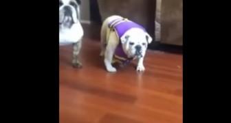 Sie zieht ihrem Hund die Rettungsweste an, aber die Reaktion ist unerwartet