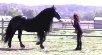 The trainer calls him: this MAGNIFICENT horse will leave you speechless !