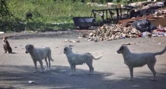 Cette plage est connue pour une horrible raison mais ces chiens auront plus de CHANCE!