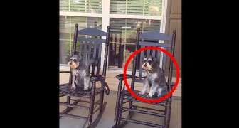 Comienza a filmar a sus perros en el porche, pero miren fijo a los ojos al de la derecha...