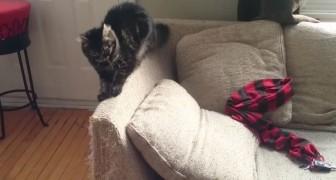Zijn katten ruïneerden al zijn meubels... daar bedacht hij een verrassende oplossing voor!