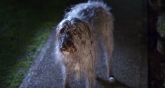 Un chien maltraité s'échappe de la maison, mais ce qu'il passe après va lui changer la vie