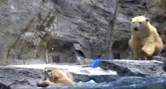 Der kleine fällt ins eiskalte Wasser, aber die Rettung der Mutter ist spektakulär