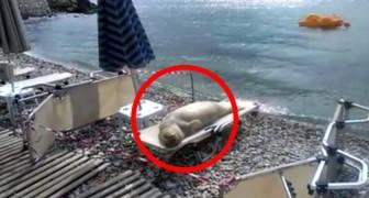 Quando você ver quem está tomando banho de sol nesta praia não vai acreditar!