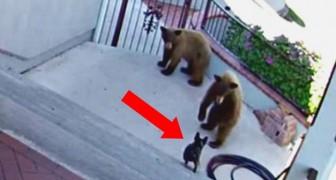 2 Bären nähern sich einem Haus, aber was die kleine Bulldogge macht, ist überraschend