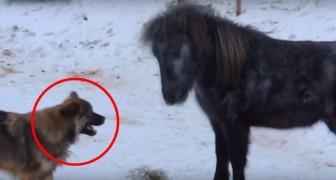 Quando il cane gli si avvicina, ciò che fa questo cavallo non ha prezzo... Bellissimi!
