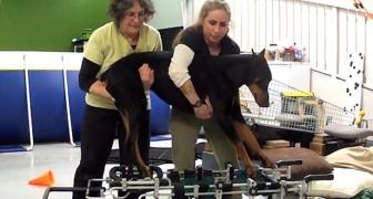 Estaba por ser sacrificar , pero lo que han hecho estas mujeres sorprendio incluso a los veterinarios