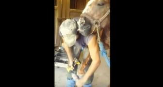Este hombre esta limando el caballo...el modo en que él le agradece lo hace reir con gusto!