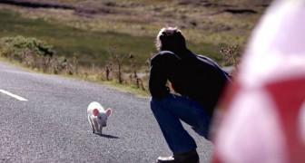Le postier remarque un petit animal sur la route... voilà ce qu'il se passe quand il le ramène à la maison