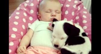Een baby en een pup groeien samen op: hun eerste levensjaar is een achtbaan van pure emoties