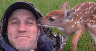 Een hertenjong weigert de man die haar leven redde te verlaten