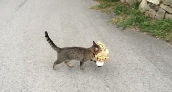 Um gato vai no vizinho e rouba um brinquedo. Porque será?