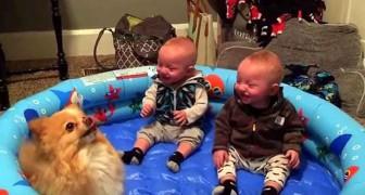 Als der Hund zu hüpfen beginnt, ist die Reaktion der Zwillinge sogar für die Mutter überraschend