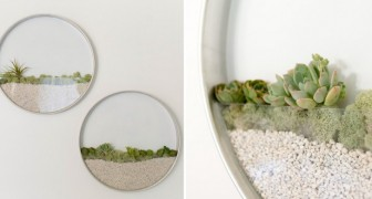 Mini-giardini da parete: una soluzione incantevole per chi ama le piante e il design