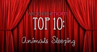 Tiere beim Einschlafen