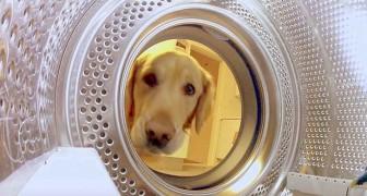 Ein Hund nähert sich der Waschmaschine... was er vorhat, wird euch zum Lachen bringen