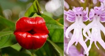 Non sembra un fiore... ma lo è: 10 specie floreali che sembrano tutt'altro