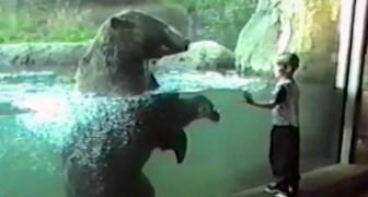 Ein Kind nähert sich dem Bär, aber niemand erwartete diese Reaktion