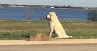 Un cane finisce su tutti i telegiornali per la sua incredibile prova di fedeltà
