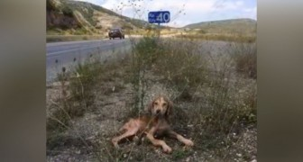 Sjuk och övergiven i längs motorvägen: denna hund blir räddad ifrån en säker död