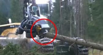 La facilidad con que esta maquina destroza los troncos del arbol es impresionante