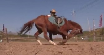 El caballo mas haragan del mundo: se acercan a montarlo y sucede lo increible