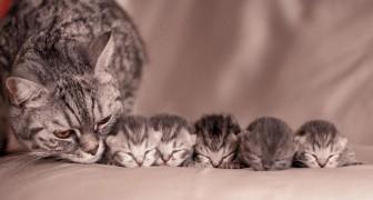Des photos d'une douceur extraordinaire entre maman chat et leurs petits adorables