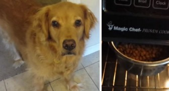 His dog won't eat dry food, but everything changes with this trick!