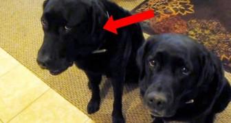 Lei chiede Chi ha rubato il biscotto?: guardate come risponde quello a sinistra...