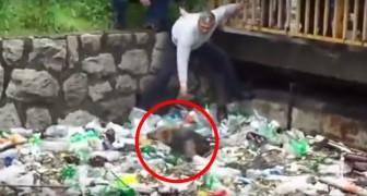 Un cane è intrappolato in un canale, ma ciò che avviene vi riempirà di orgoglio!