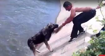Les 10 sauvetages de chiens les plus INCROYABLES de tous les temps... un spectacle à voir!