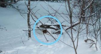Un uomo vede una scatola nella neve. Quando si avvicina non può credere ai suoi occhi